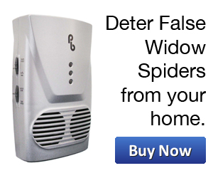 deter spiders